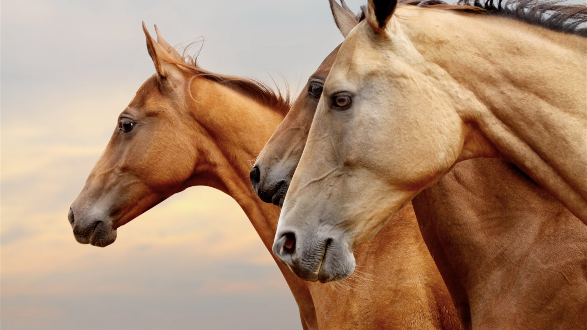Equester Iași - club de echitatie si pensiune pentru cai