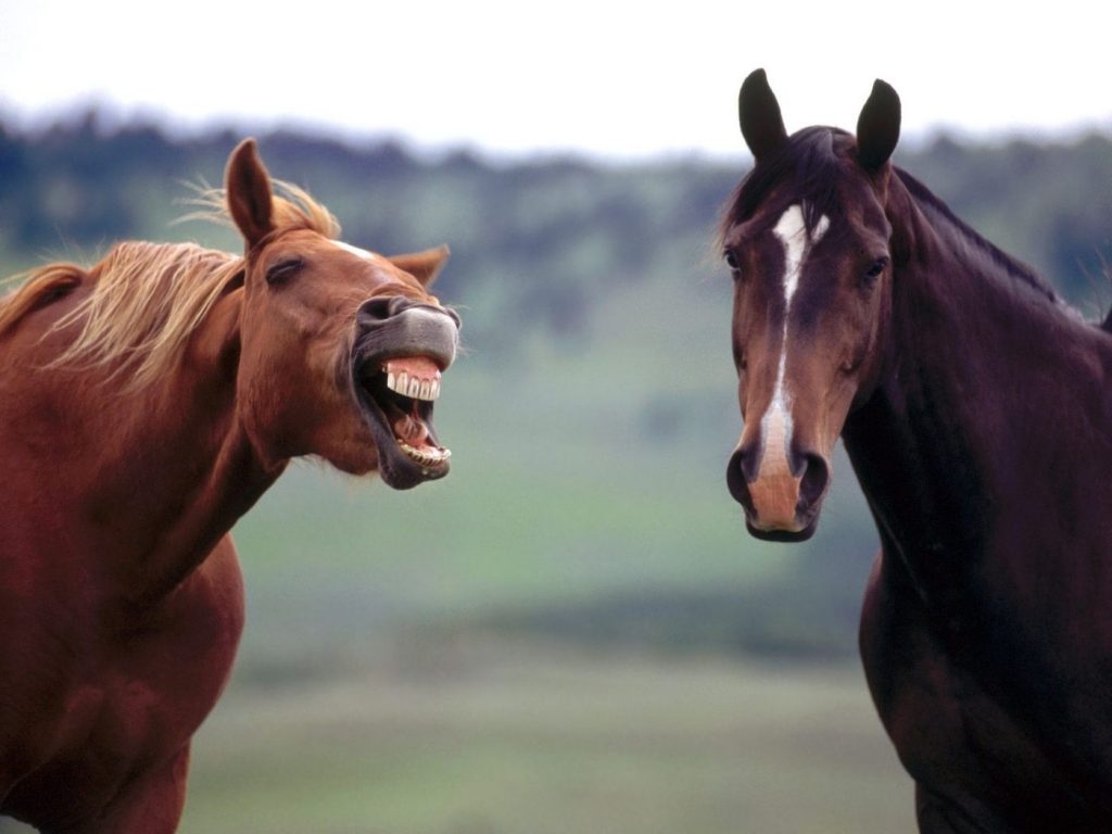 Curiozitati despre cai