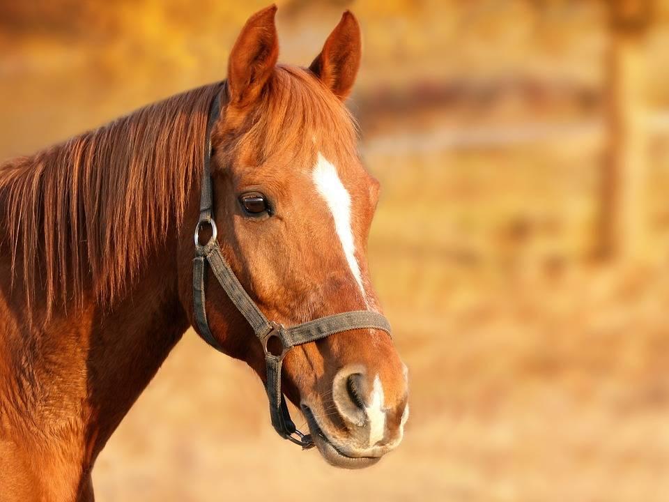 Echitatie Iasi Equester Riding Club