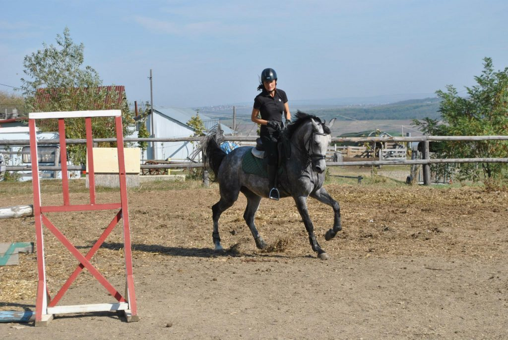 Echitatie pentru adulti - Clubul Equester