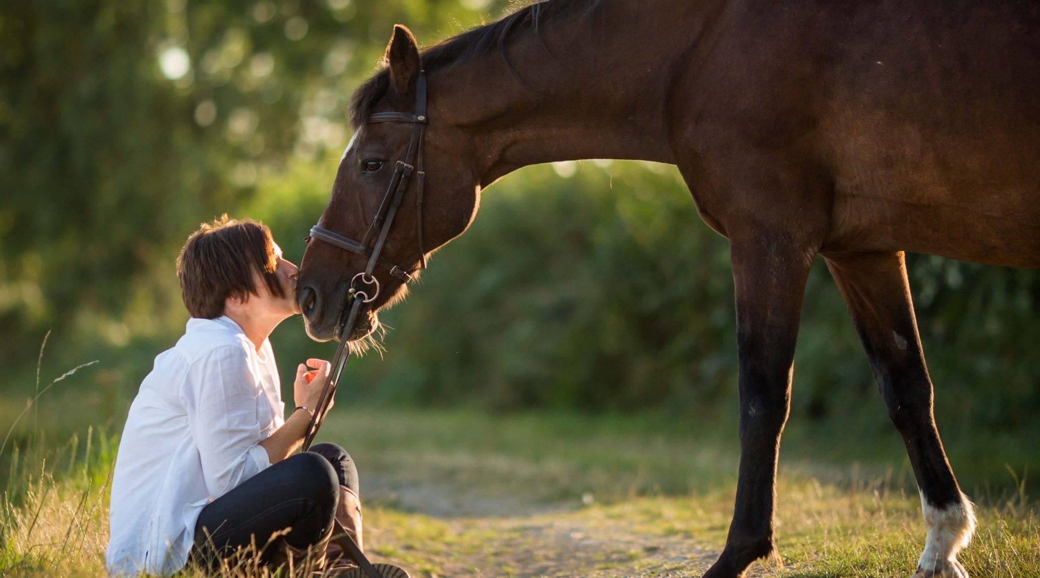 Equester Riding Club - slider 2