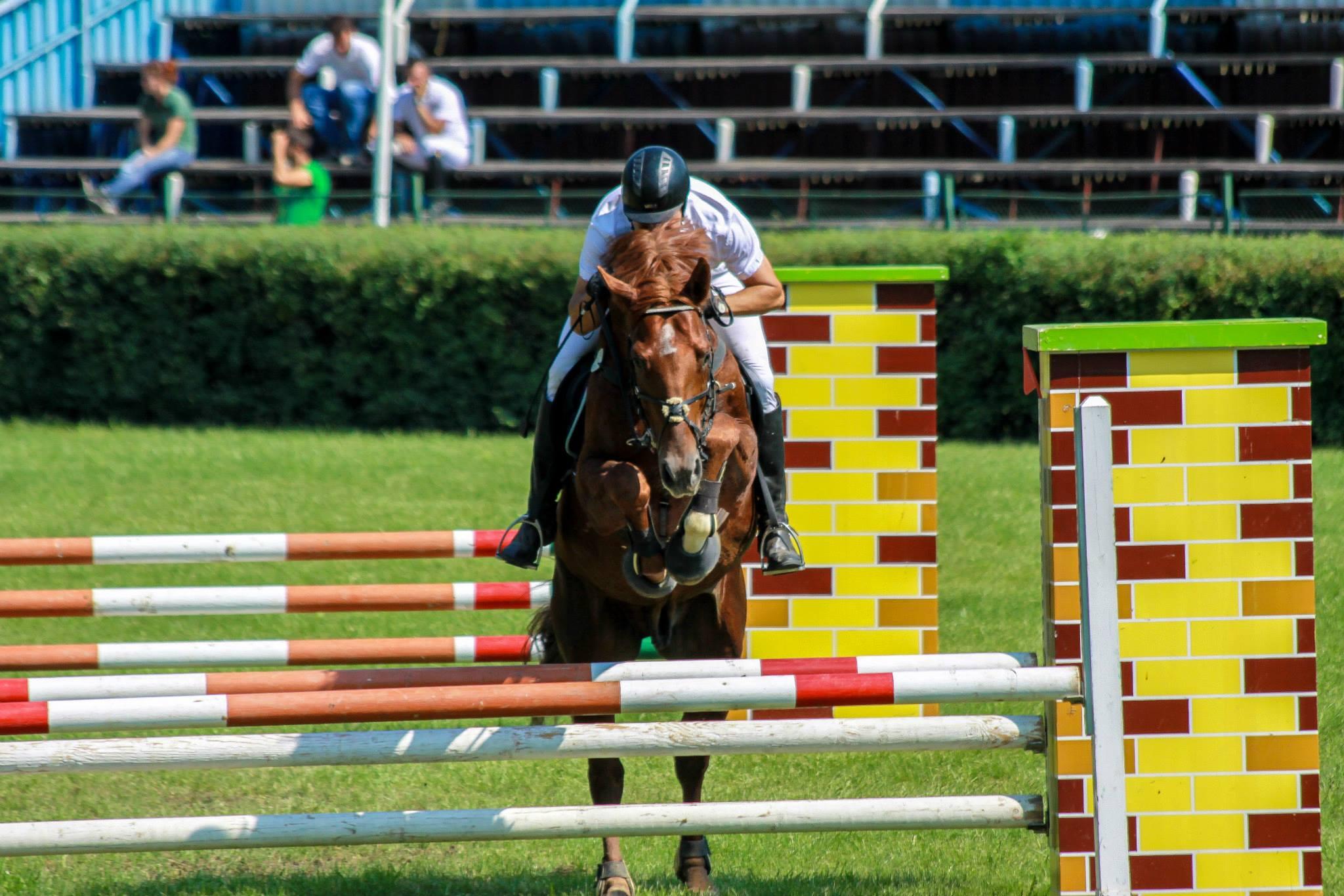 Equester club sportiv de echitatie Iasi 6