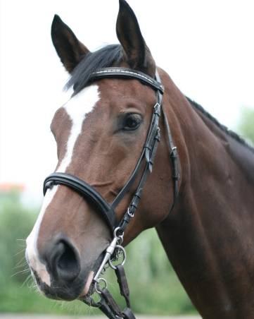 Markanz - lectii calarie copii - Equester Iasi