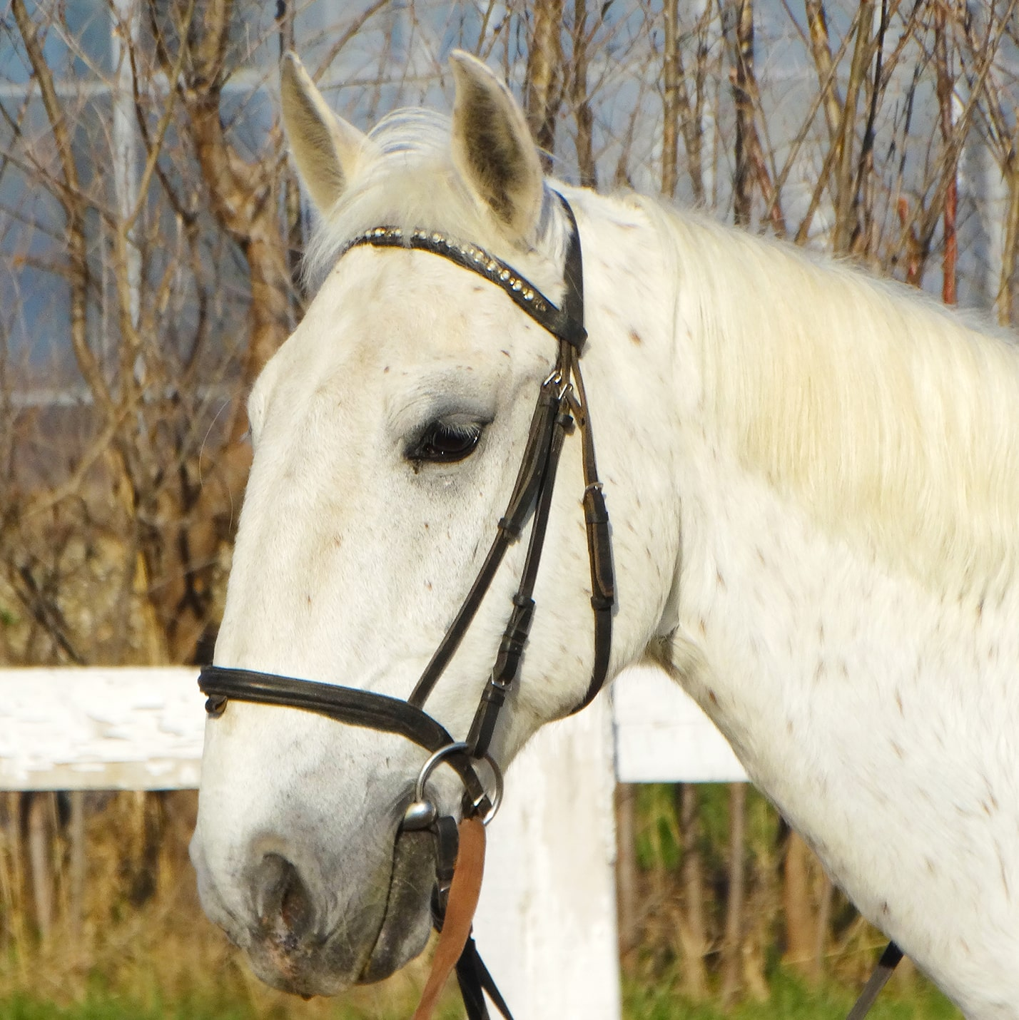 Soim - cursuri de calarie Equester Iasi
