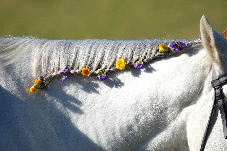 Sarbatori-de-Pasti-program-Equester-web