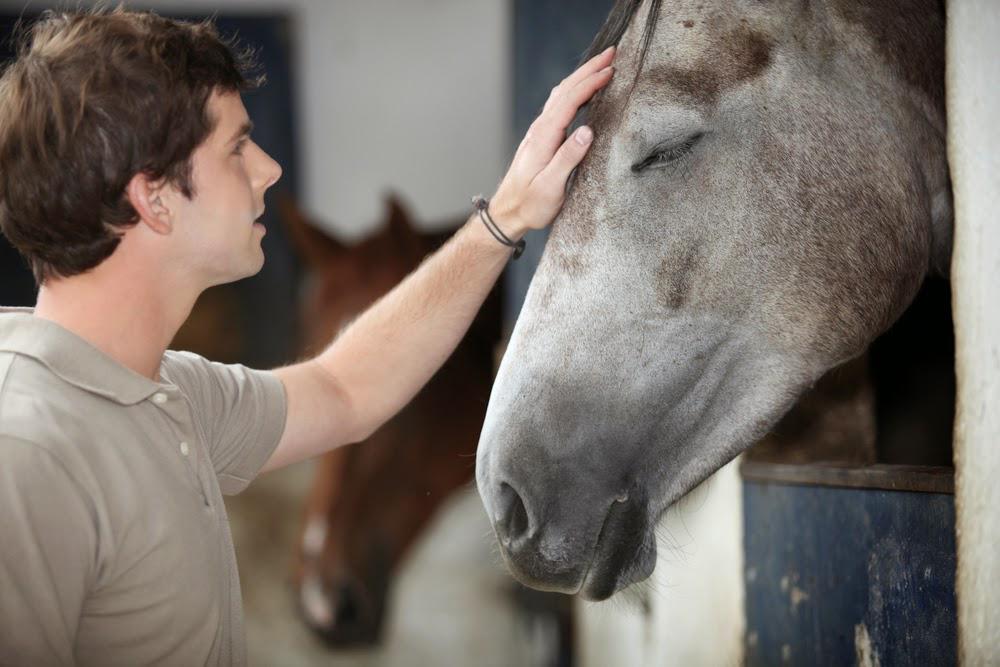 Terapia cu cai - Equester Iasi