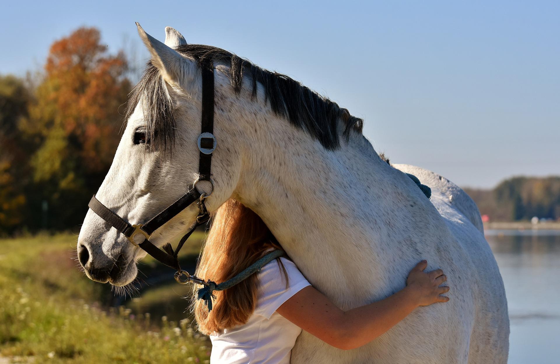 Limbajul cailor - prietenie - clubul sportiv Equester