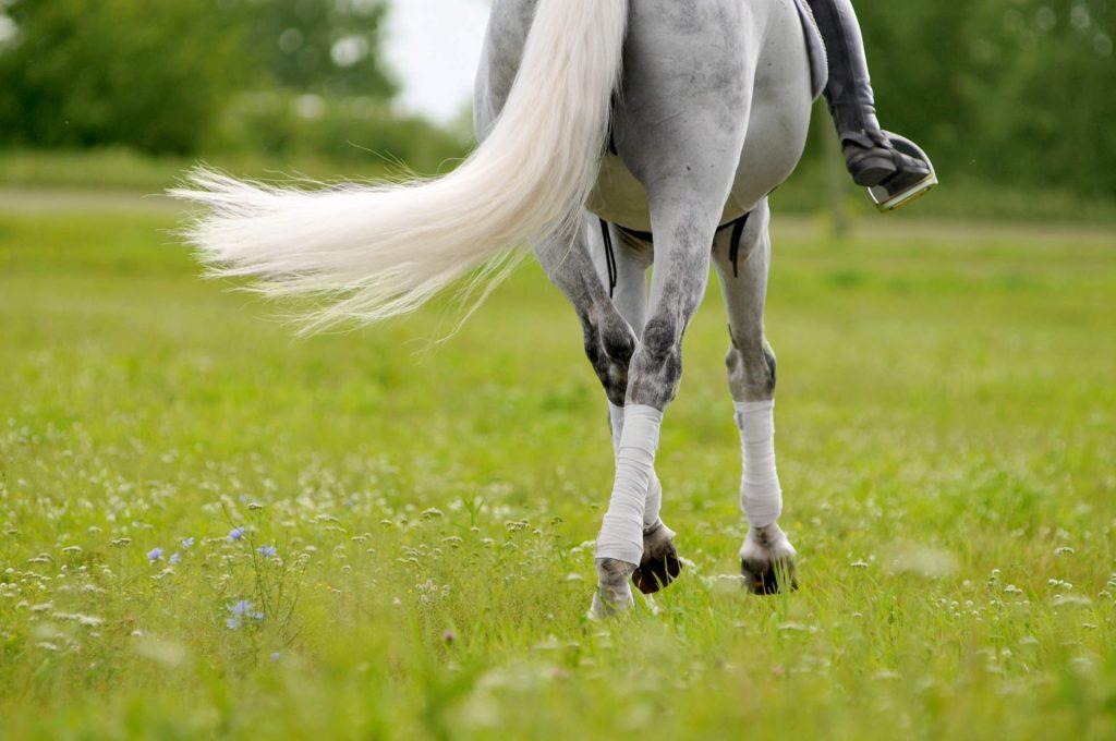 Limbajul corpului calului - miscarile cozii