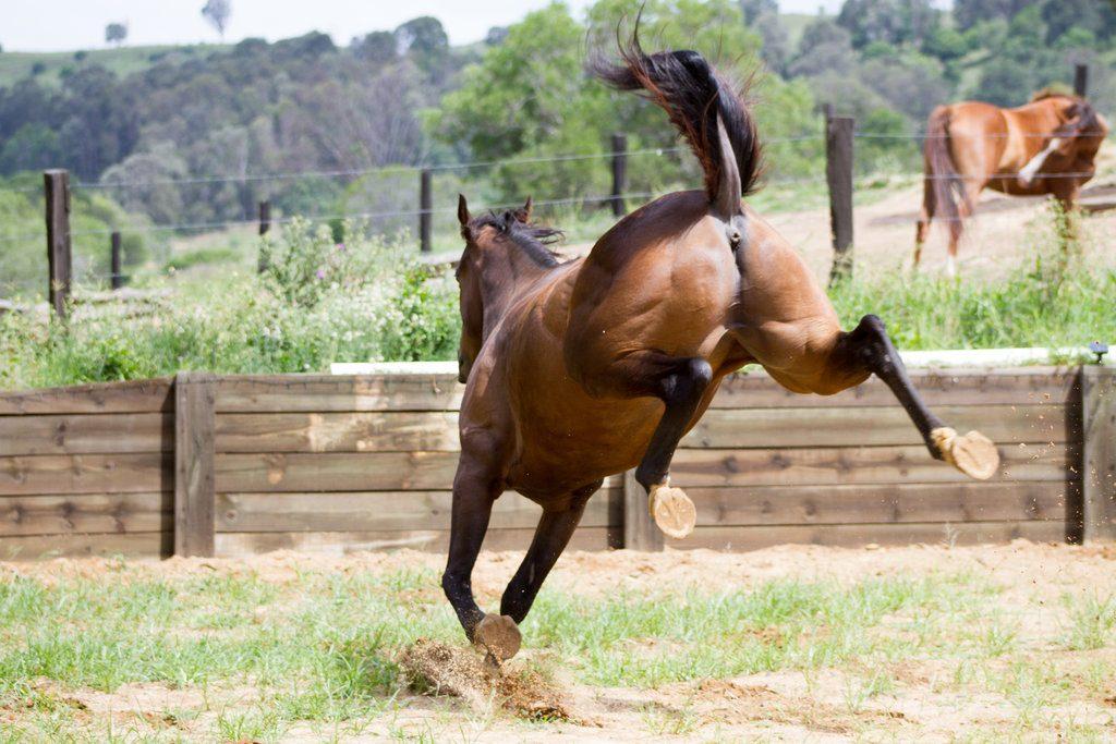 Limbajul corpului calului - picioarele